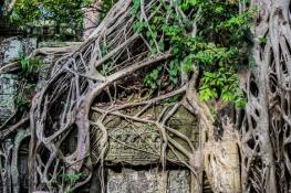 Cambodia-298