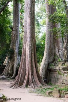 Cambodia-310