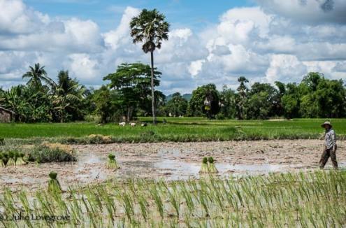 Cambodia-325
