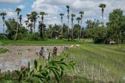Cambodia-328