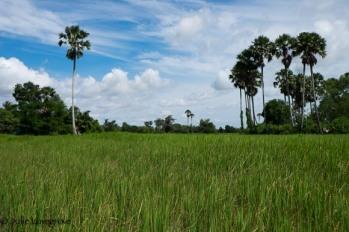 Cambodia-329
