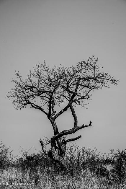 Thanda-185