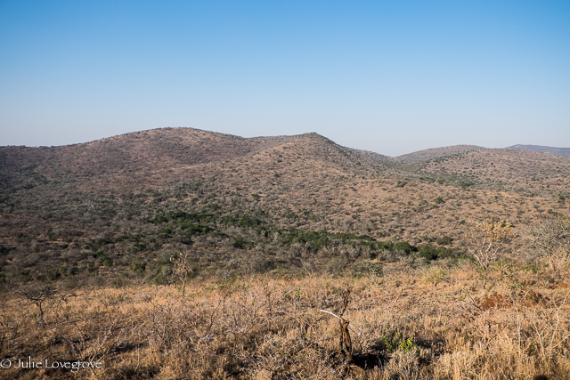 Could you spot an elephant from this far away?
