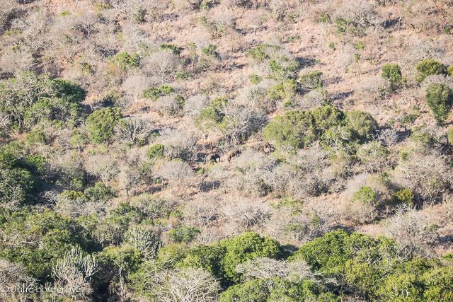 Spot the elephants!