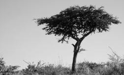 Thanda-506