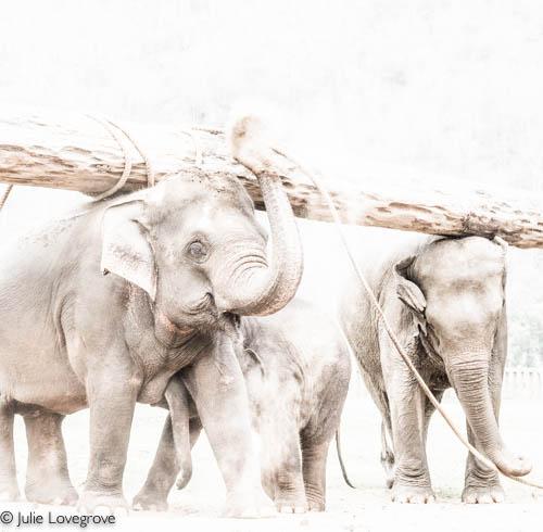 Thailand-109-2