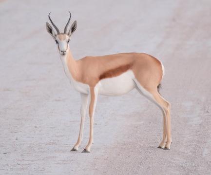 Namibia-319-2