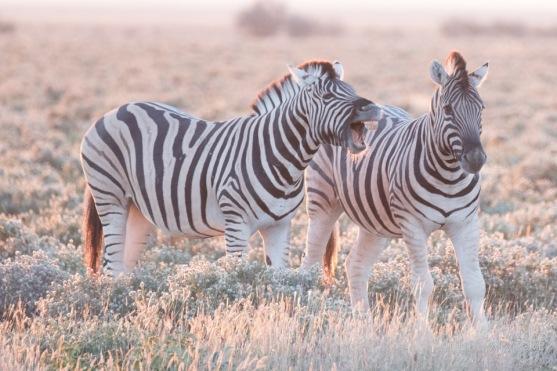 Namibia-324