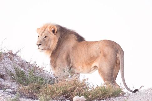 Namibia-350