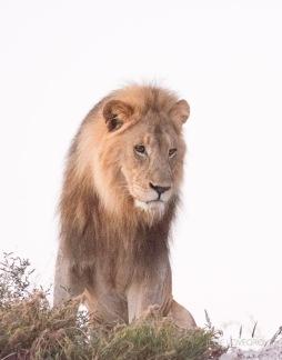 Namibia-351