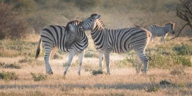 Namibia-363