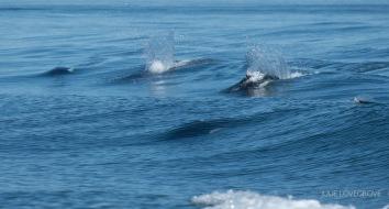 Porpoises keeping up with us