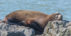 The art of getting comfortable anywhere!