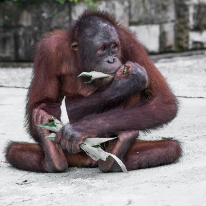 Borneo-429
