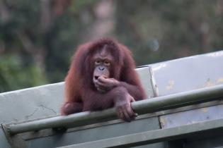 Borneo-431