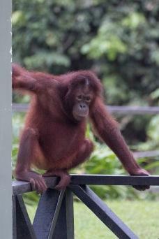 Borneo-433