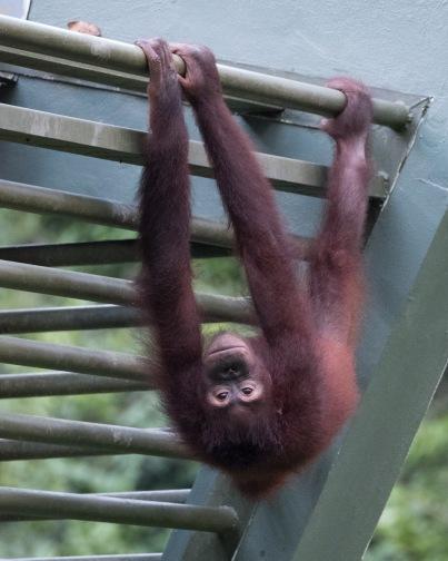 Borneo-434