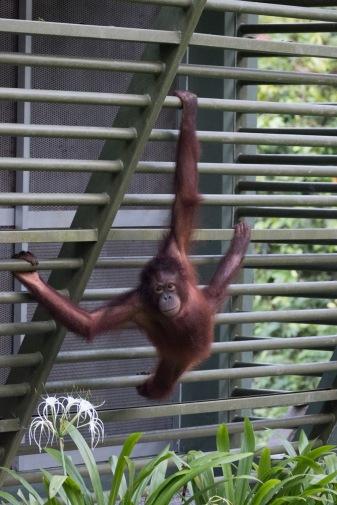 Borneo-435