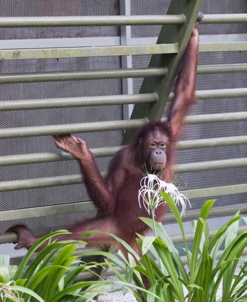 Borneo-437