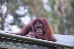 Borneo-438