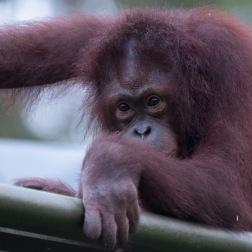 Borneo-439