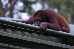 Borneo-440