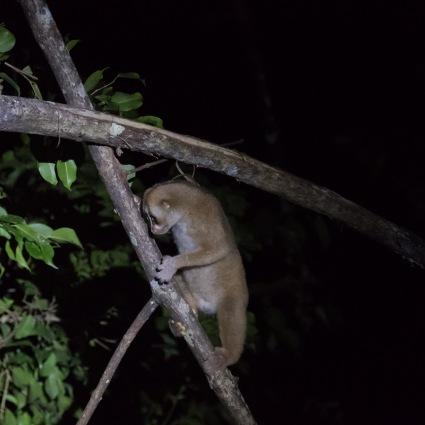 Borneo-446