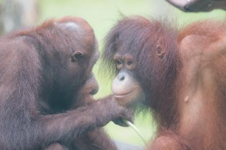Borneo-541