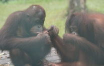 Borneo-543